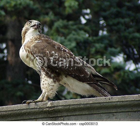 Birds Eye - csp0003013