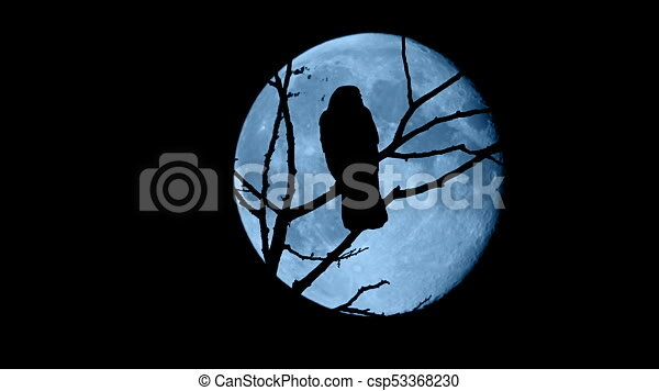 Birds Fly Off Branches In Front Of Full Moon Bird Dark Against A