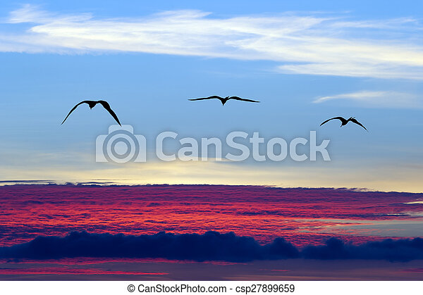 Birds Flying Silhouette - csp27899659