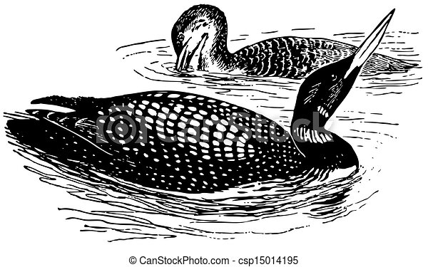 Birds Great Northern Loon - csp15014195