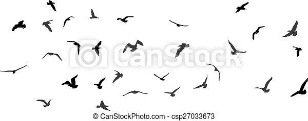 Birds, gulls, black silhouette on white background. Vector - csp27033673