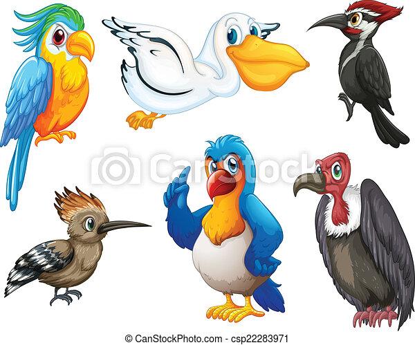 Birds - csp22283971