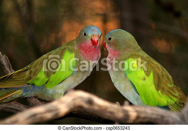 Birds in Australia 1 - csp0653243