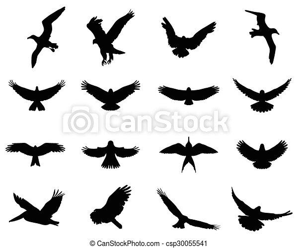 birds in flight - csp30055541
