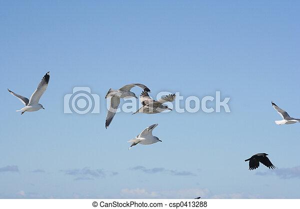 Birds in Flight - csp0413288
