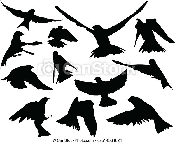 Birds in flight Silhouettes - csp14564624