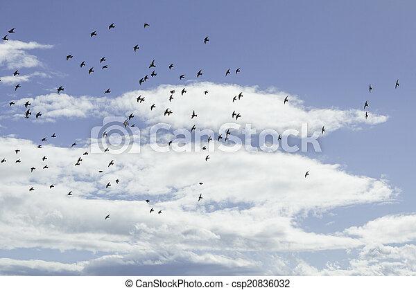 Birds in flight - csp20836032