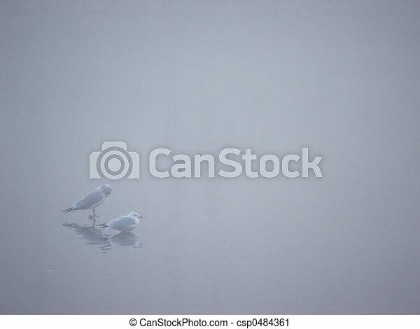 Birds in the Mist 1 - csp0484361