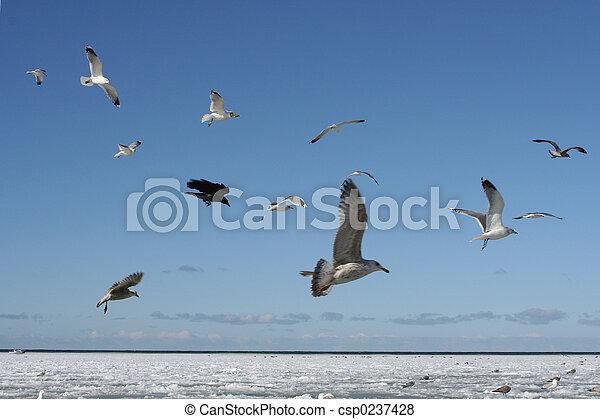 Birds in the Sky - csp0237428