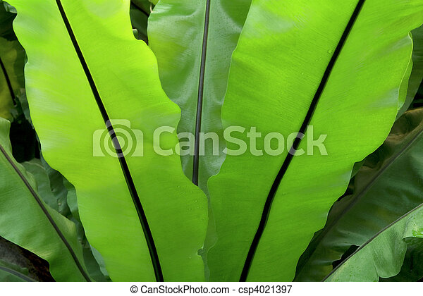 Broad leaf fern pictures # Weight Loss New Bedford Ma - m