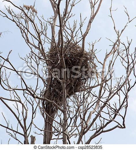 bird's nest on a tree - csp28523835