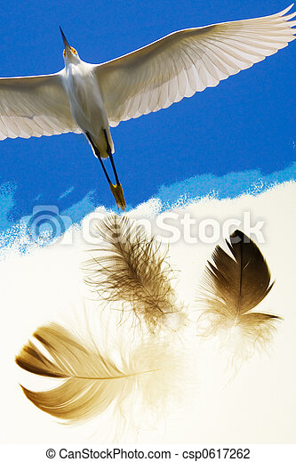 Birds of a feathers - csp0617262