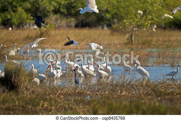 Birds of Florida - csp8435769