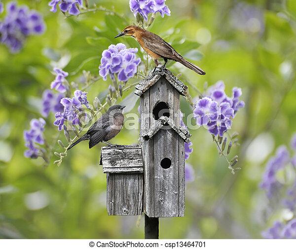 Birds On A Bird House - csp13464701