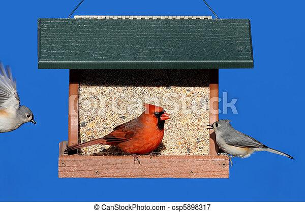 Birds on a Feeder - csp5898317