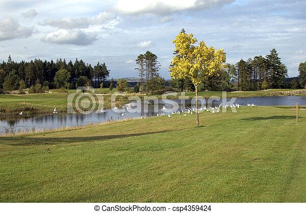 birds on a golf course - csp4359424