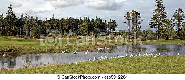 birds on a golf course - csp5312284
