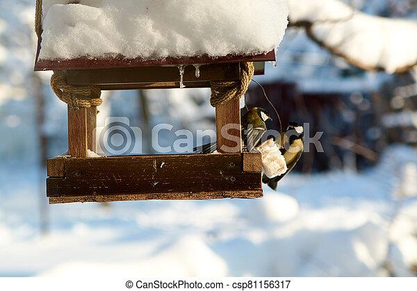 Birds on a snowy feeding trough on a sunny winter day. - csp81156317