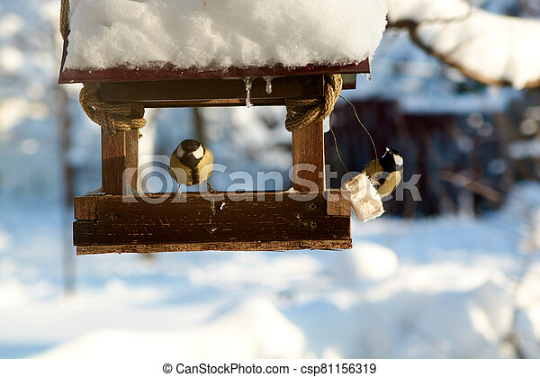 Birds on a snowy feeding trough on a sunny winter day. - csp81156319