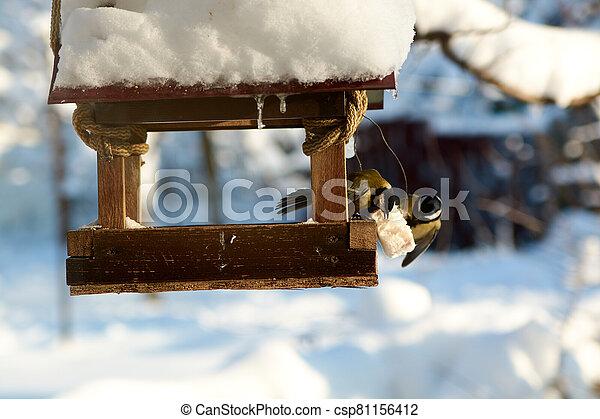 Birds on a snowy feeding trough on a sunny winter day. - csp81156412