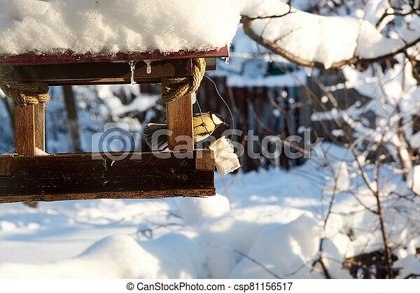 Birds on a snowy feeding trough on a sunny winter day. - csp81156517