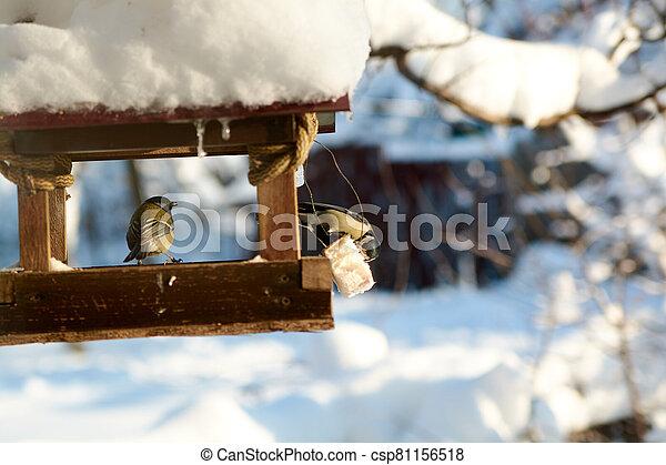 Birds on a snowy feeding trough on a sunny winter day. - csp81156518