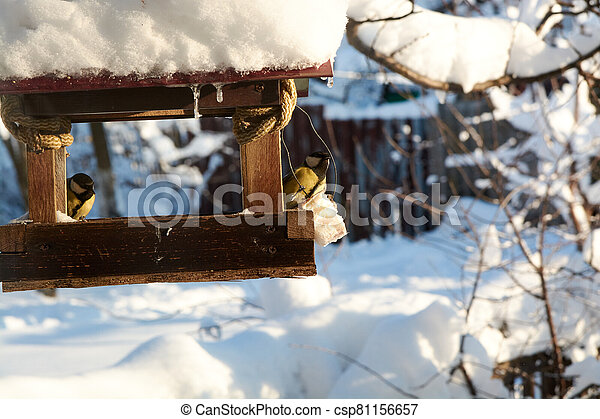 Birds on a snowy feeding trough on a sunny winter day. - csp81156657