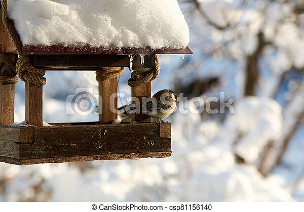 Birds on a snowy feeding trough on a sunny winter day. - csp81156140