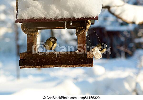 Birds on a snowy feeding trough on a sunny winter day. - csp81156320