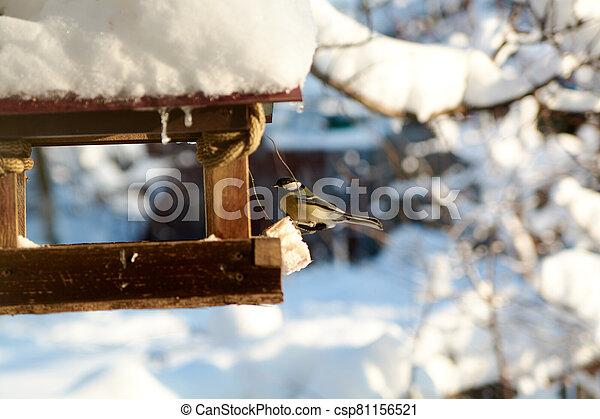 Birds on a snowy feeding trough on a sunny winter day. - csp81156521