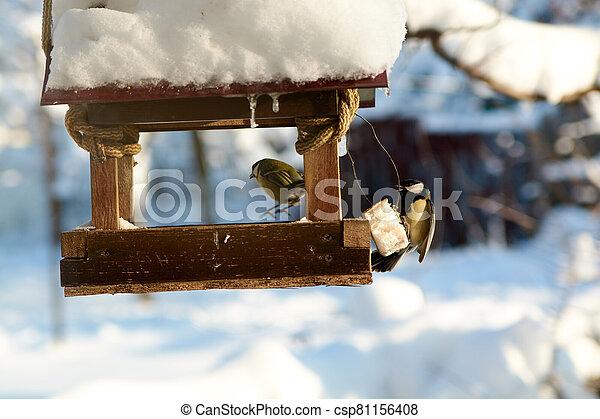 Birds on a snowy feeding trough on a sunny winter day. - csp81156408