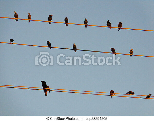 Birds On a Wire Cable picture - csp23294805