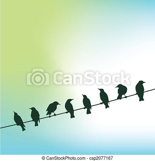 birds on a wire - csp2077167