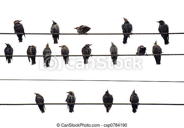 Birds on a Wire. Isolated on white. - csp0784190