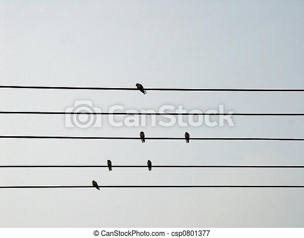 Birds on a Wire - csp0801377