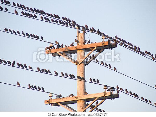 Birds on a wire - csp0857471