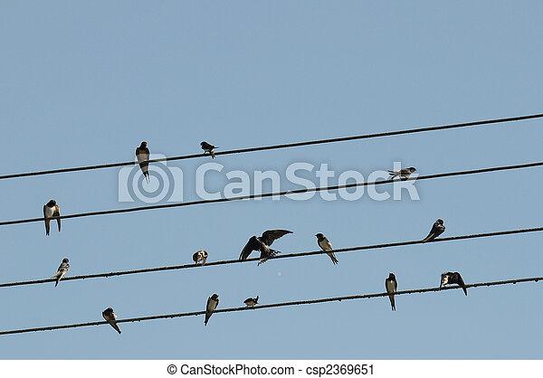 birds on a wire - csp2369651