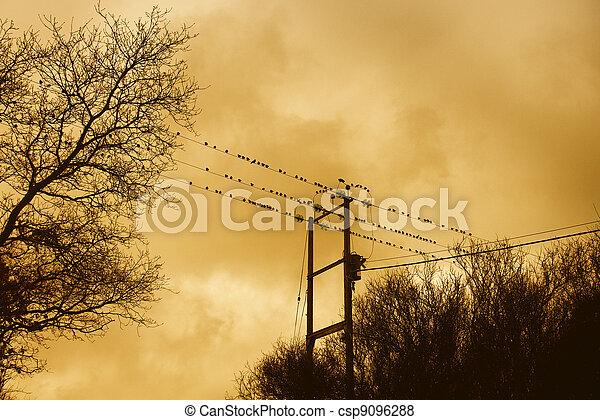 Birds on a wire - csp9096288