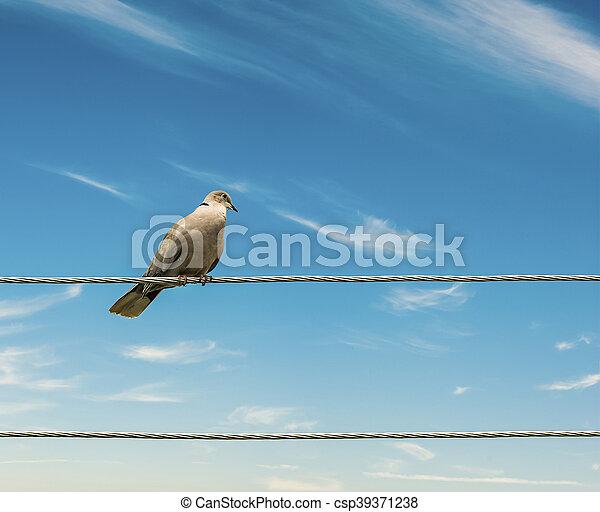 Birds on a wire sky background. - csp39371238