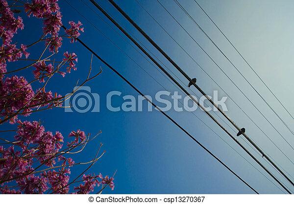 birds on a wire - csp13270367