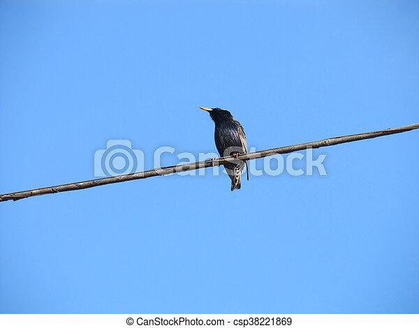 Birds on a wire - csp38221869