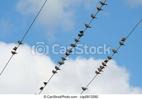 Birds on a wire - csp0813392