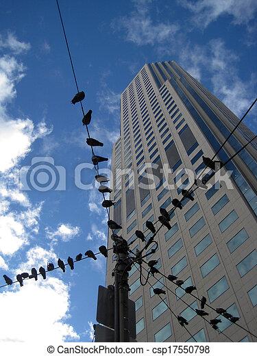 Birds on a wire - csp17550798