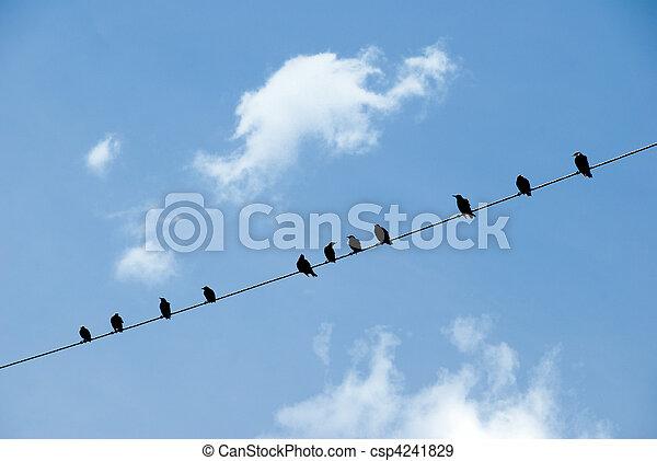 Birds on a wire - csp4241829