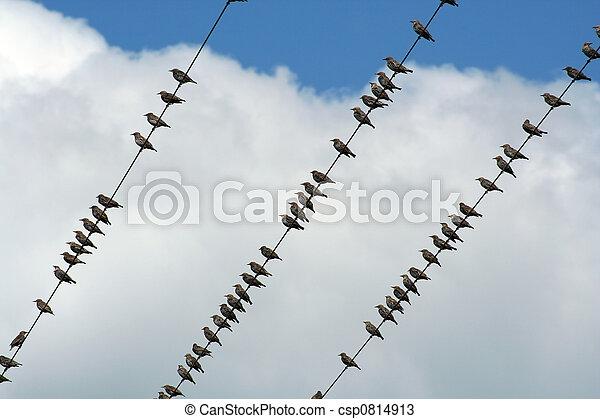 Birds on a wire - csp0814913