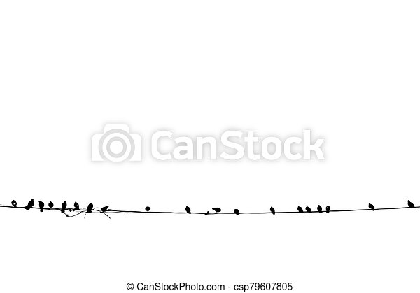 Birds on a wire vector illustration on white background - csp79607805