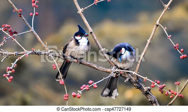 Birds on branch - csp47727149