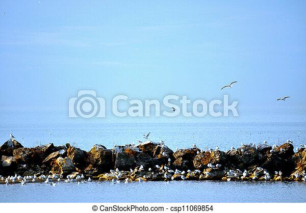 Birds on rocks on Lake Erie - csp11069854