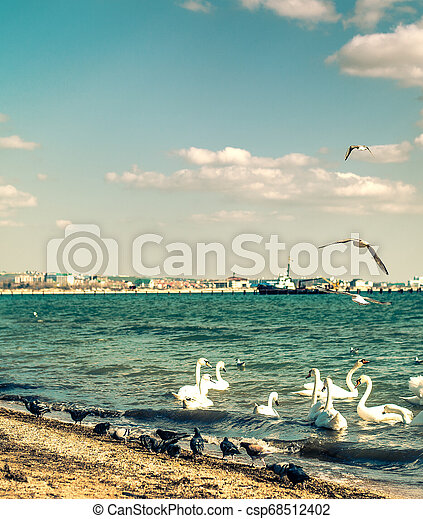 birds on the town beach - csp68512402