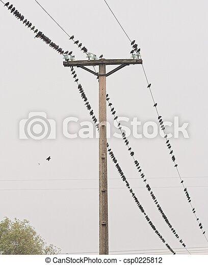 Birds on the wire 1 - csp0225812